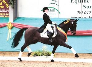 ekko-horses-bimba