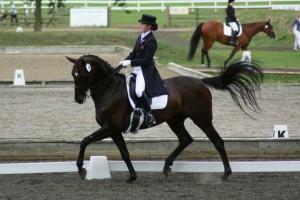 Ekko Horses